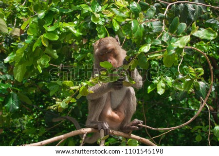 Monkey in the lush forest #1101545198