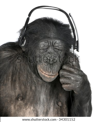 Monkey listening music closed eyes with his black headset  in front of a white background (Mixed-Breed between Chimpanzee and Bonobo (20 years old))