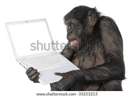 monkey looking at an empty computer screen (Mixed-Breed between Chimpanzee and Bonobo) (20 years old) in front of a white background