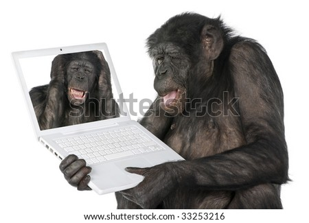 monkey looking at an other monkey on a computer screen (Mixed-Breed between Chimpanzee and Bonobo) (20 years old) in front of a white background