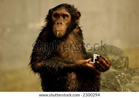 Monkey looking seriously . Location : Bangkok, Thailand