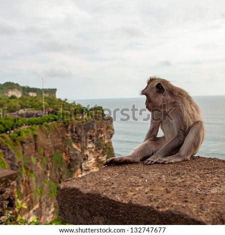 Monkey (Macaca fascicularis) near Pura Ulawatu temple near Ubud, Bali Indonesia.