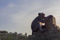 Monkey Macaca fascicularis sitting at sunset with uluwatu temple in the background, Bali island landscape. Famous Indonesia landmark at dusk