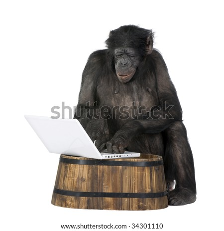 monkey (Mixed-Breed between Chimpanzee and Bonobo) playing with a laptop (20 years old) in front of a white background