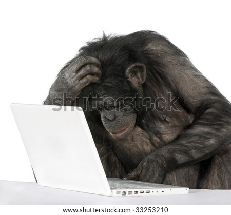 monkey (Mixed-Breed between Chimpanzee and Bonobo)v playing with a laptop in front of a white background