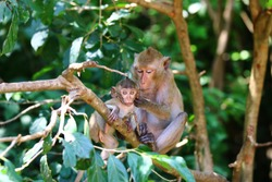 Monkey mom taking care of her baby,  Monkeys sitting on tree branch
