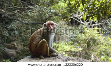 Monkey. Monkey macaque in the rain forest. Monkeys in the natural environment. China, Hainan #1323306320