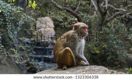 Monkey. Monkey macaque in the rain forest. Monkeys in the natural environment. China, Hainan #1323306338