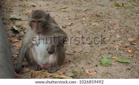 Monkey monkey monkey #1026859492