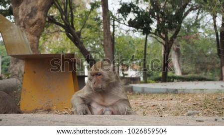 Monkey monkey monkey #1026859504