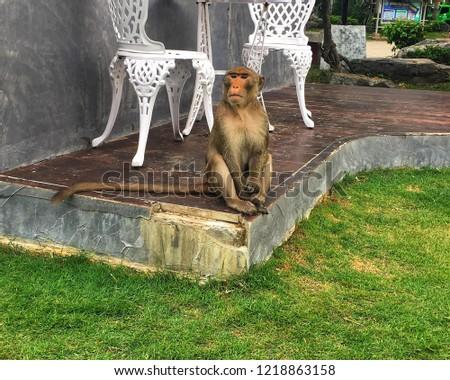 Monkey Monkey Monkey #1218863158