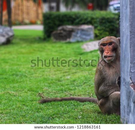Monkey Monkey Monkey #1218863161