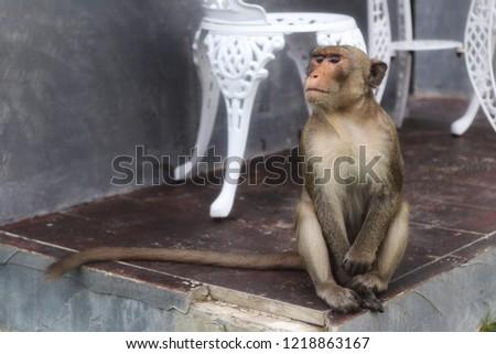 Monkey Monkey Monkey #1218863167