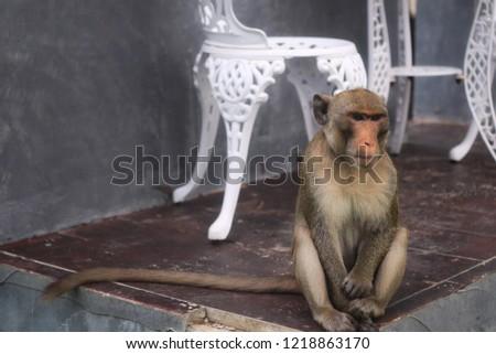 Monkey Monkey Monkey #1218863170