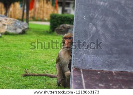 Monkey Monkey Monkey #1218863173