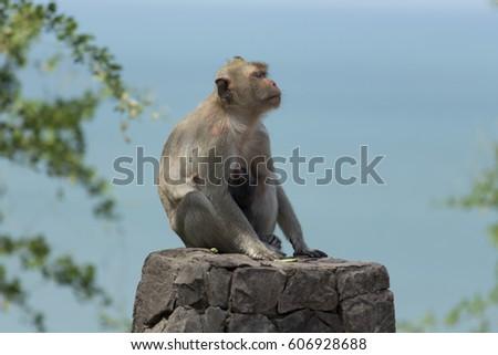 Monkey Monkey with Monkey Ball #606928688