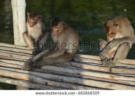 Monkey Monkey with Monkey Ball #682868509