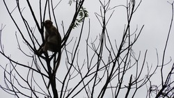 monkey on a tree. Animals in India