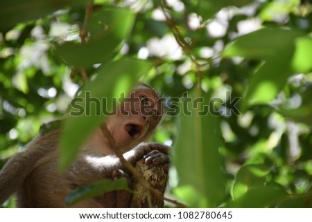 Monkey on a tree in the jungle