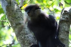 monkey on jungle beach sri lanka