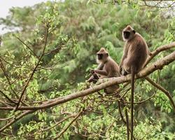 Monkey on the tree ,Monkey Climbing Tree