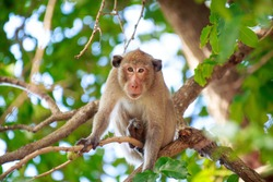 Monkey on the tree ,Monkey Climbing Tree