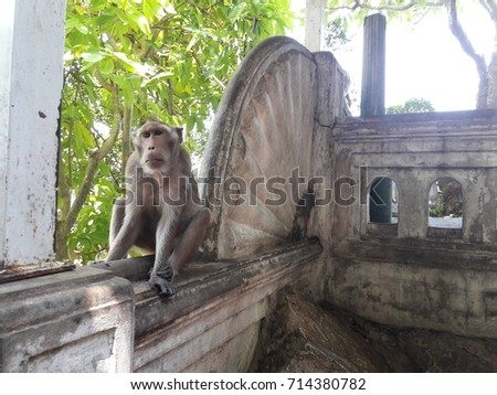 Monkey on the wall #714380782