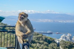 Monkey railing Gibraltar and thinking about his beautiful life