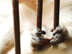 Monkey's hands hold the cage