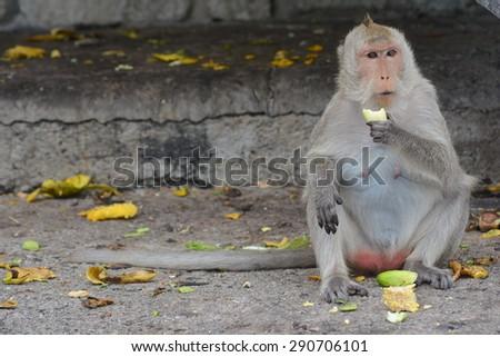 Monkey sit on the floor eating bananas