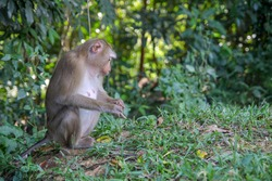 Monkey sitdown in side forest