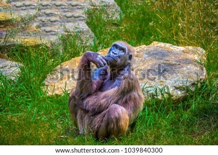 Monkey sitting and thinking