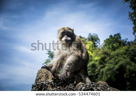 Monkey sitting on rock on background of jungles and sky.  #534474601
