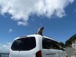 Monkey sitting on the car, Gibraltar