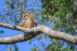 Monkey sleeping on the tree in the morning at Khao-Yai National park, Thailand