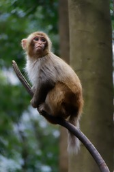 Monkey standing on a branch while looking up