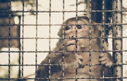 Monkey staying in the cage / Animal rights concept