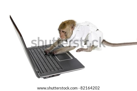 Monkey to learn to work at the computer