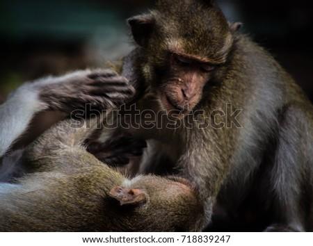 monkey to monkey #718839247