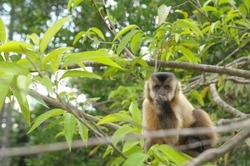 Monkey wild in the tree