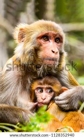 Monkey with baby portrait. Cute monkey with cub. Monkey mother love #1128352940