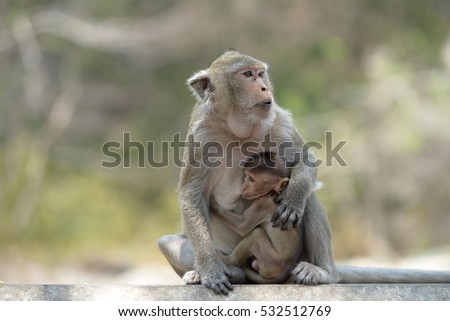 monkey with family in pechburi  Province thailand