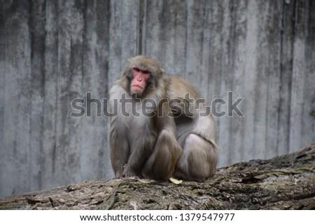 monkeys at the zoo #1379547977
