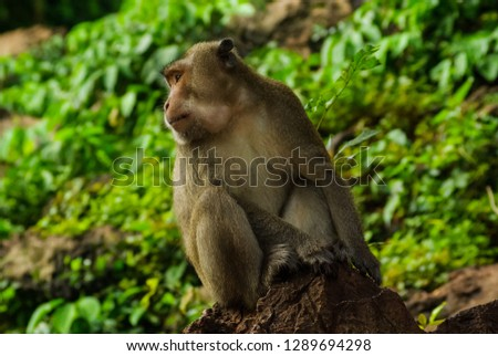 Monkeys in Thailand, monkeys of the order of the monkey in nature #1289694298