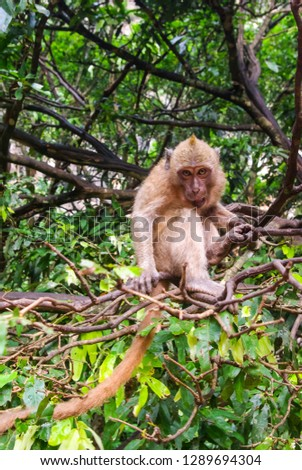 Monkeys in Thailand, monkeys of the order of the monkey in nature #1289694304