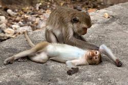 Monkeys love