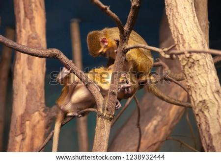 Monkeys on a tree in the park. Praha. Czech Republic.