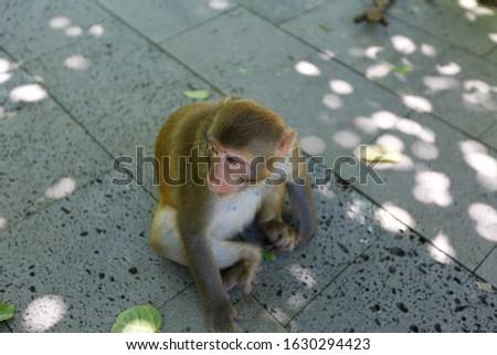 Monkeys on the Monkey island in Hainan In China