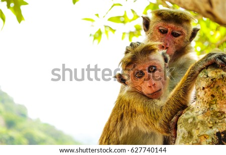 Monkeys on tree. Monkey portrait #627740144
