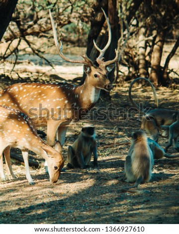 Monkeys sitting besides deer in the Forest in TUlshishyam, Gujarat, India #1366927610
